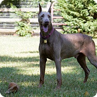Adopt A Pet :: BURBANK - Greensboro, NC