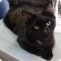 Adopt A Pet :: Mystic - Leitchfield, KY