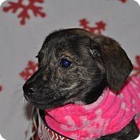 Adopt A Pet :: Nala - Tumwater, WA