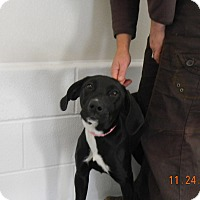 Adopt A Pet :: DIAMOND - Sandusky, OH