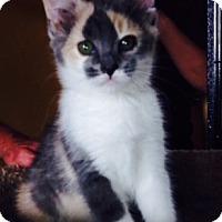 Adopt A Pet :: Gidget - Encinitas, CA