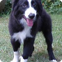 Adopt A Pet :: Lil Man - Bedminster, NJ