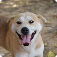Adopt A Pet :: Barbara - Groton, MA
