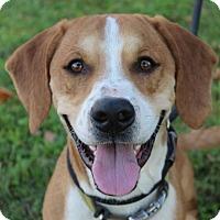 Adopt A Pet :: BAGEL - Red Bluff, CA