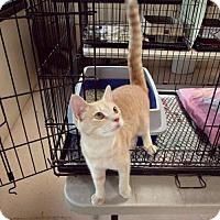 Adopt A Pet :: Buckwheat - Albemarle, NC