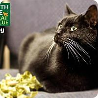 Adopt A Pet :: Toby - Oakville, ON