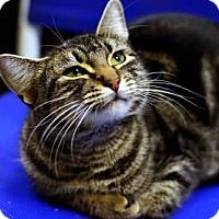 Adopt A Pet :: Louie - Fort Smith, AR