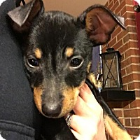 Adopt A Pet :: Chip - Round Lake Beach, IL