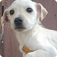 Adopt A Pet :: Cooper - Lakewood, CO
