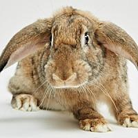 Adopt A Pet :: Bennet - Mill Valley, CA