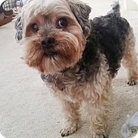 Adopt A Pet :: Leo - West Springfield, MA
