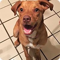 Adopt A Pet :: Zarina - Yukon, OK