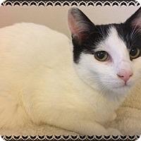 Adopt A Pet :: Geoffrey - Toledo, OH