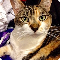 Adopt A Pet :: Ninny - Novato, CA