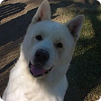 Adopt A Pet :: Logan - Scottsdale, AZ