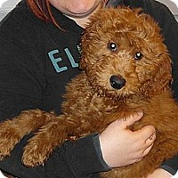 Adopt A Pet :: Wally - Hamilton, ON