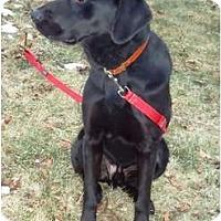 Adopt A Pet :: Milo PENDING - Toronto/Etobicoke/GTA, ON
