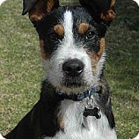 Adopt A Pet :: DIEGO - Torrance, CA
