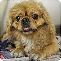 Adopt A Pet :: Hong Se-DE - Mays Landing, NJ
