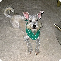 Adopt A Pet :: Mia - Carrollton, TX