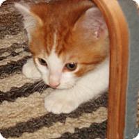 Adopt A Pet :: Neptune - N. Billerica, MA
