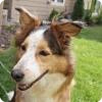 Adopt A Pet :: HILDY - Dublin, OH