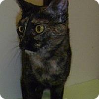 Adopt A Pet :: Africa - Hamburg, NY