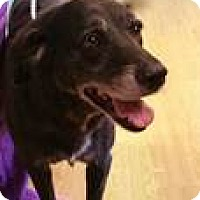 Adopt A Pet :: Holly - New Canaan, CT