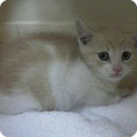 Adopt A Pet :: Potter - East Brunswick, NJ