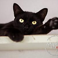 Adopt A Pet :: Gambino - Mohawk, NY