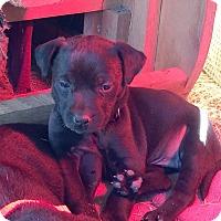 Adopt A Pet :: Regina AD 01-16-16 - Preston, CT