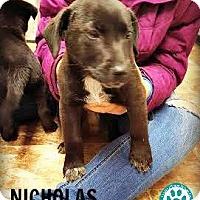Adopt A Pet :: Nicholas - Kimberton, PA