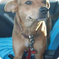 Adopt A Pet :: Alice - Charlestown, RI