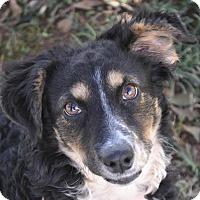 Adopt A Pet :: Desi - Atlanta, GA