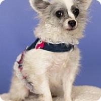 Adopt A Pet :: Georgia - Mesa, AZ
