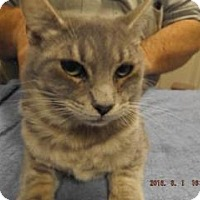 Adopt A Pet :: Walsh - Florence, TX