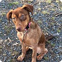Adopt A Pet :: Nadia - Albemarle, NC