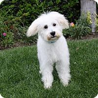 Adopt A Pet :: JACK - Newport Beach, CA