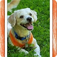Adopt A Pet :: Pending!!Rocket - TX - Tulsa, OK