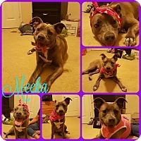 Adopt A Pet :: Meeka - Ft Worth, TX