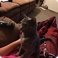 Adopt A Pet :: Jade - Garner, NC