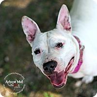 Adopt A Pet :: Coconut - Lyons, NY