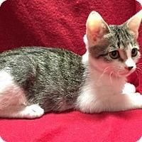 Adopt A Pet :: Frankie - Fresno, CA