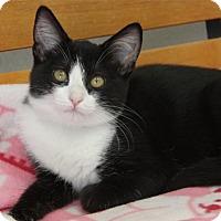 Adopt A Pet :: Callie - Hawthorne, CA