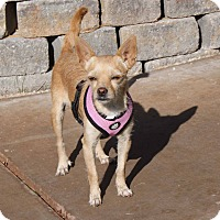 Adopt A Pet :: Viva - Apple Valley, UT