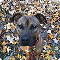 Adopt A Pet :: Poppy - Walden, NY