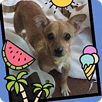 Adopt A Pet :: Kelvin - Scottsdale, AZ
