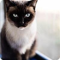 Adopt A Pet :: Sushi - Huntsville, AL