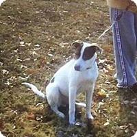 Adopt A Pet :: Memphis **in a foster home** - Breinigsville, PA