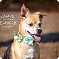 Adopt A Pet :: Chloe - Fort Valley, GA